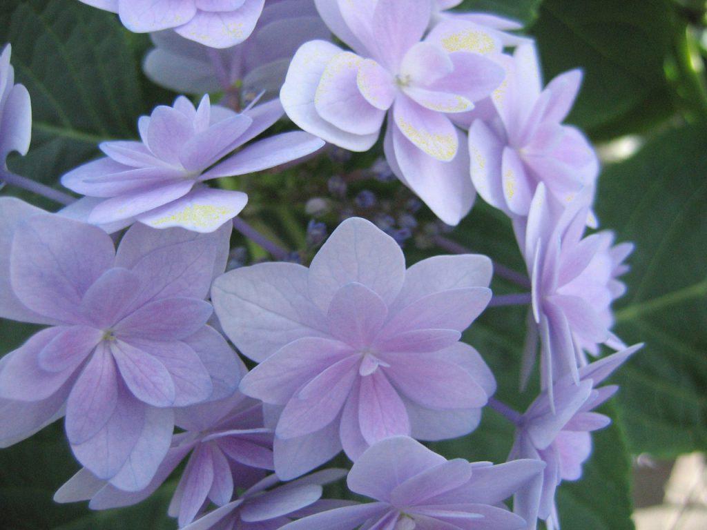 bloemen verneveling agro